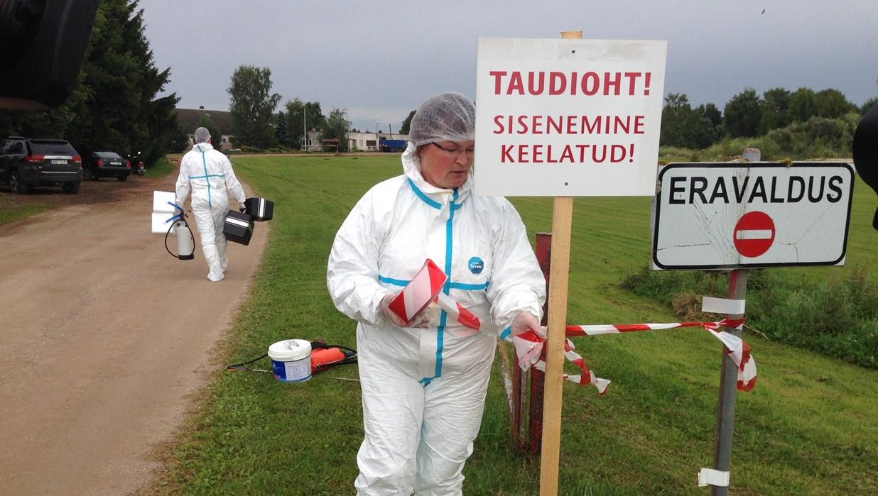 Photo of Estoniyada Afrika vabosi virusi aniqlandi