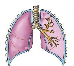 Photo of Bronxial astma qiynaganda