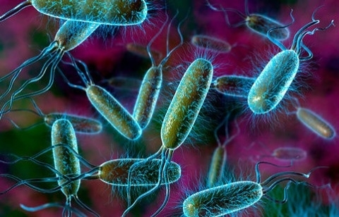 Eng xavfli bakteriyalar