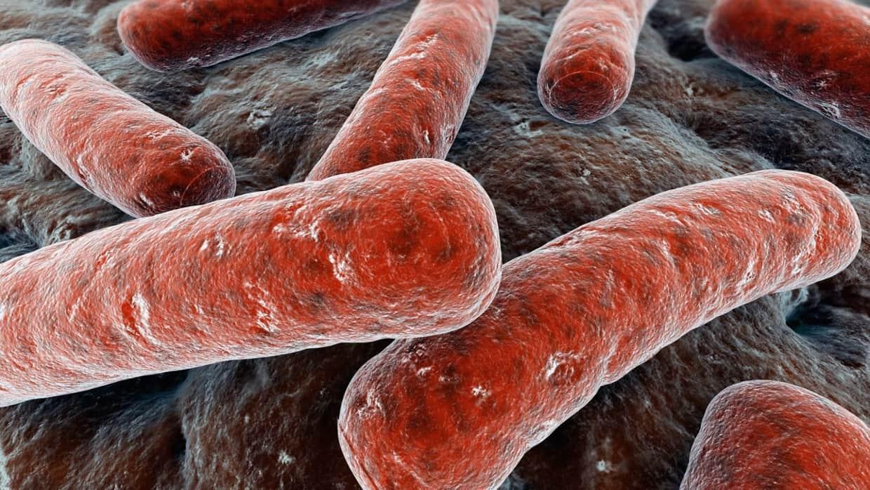 Photo of Sil mikroblari bilan barcha a'zo zararlanishi mumkinmi?