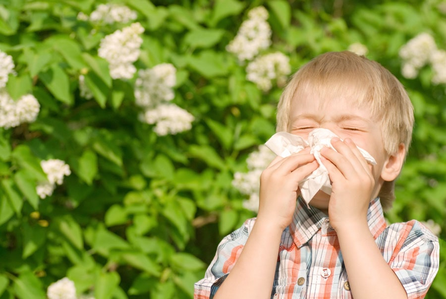 pollinoz, changga allergiya